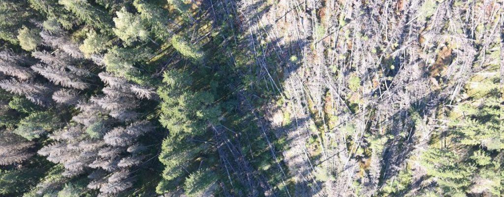 Dronefinland - kaarnakuoriaiset