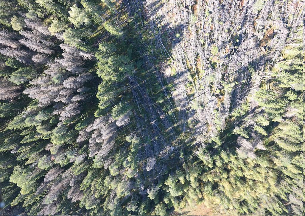 Kevyet hyperspektrikamerat kertovat puiden terveyden