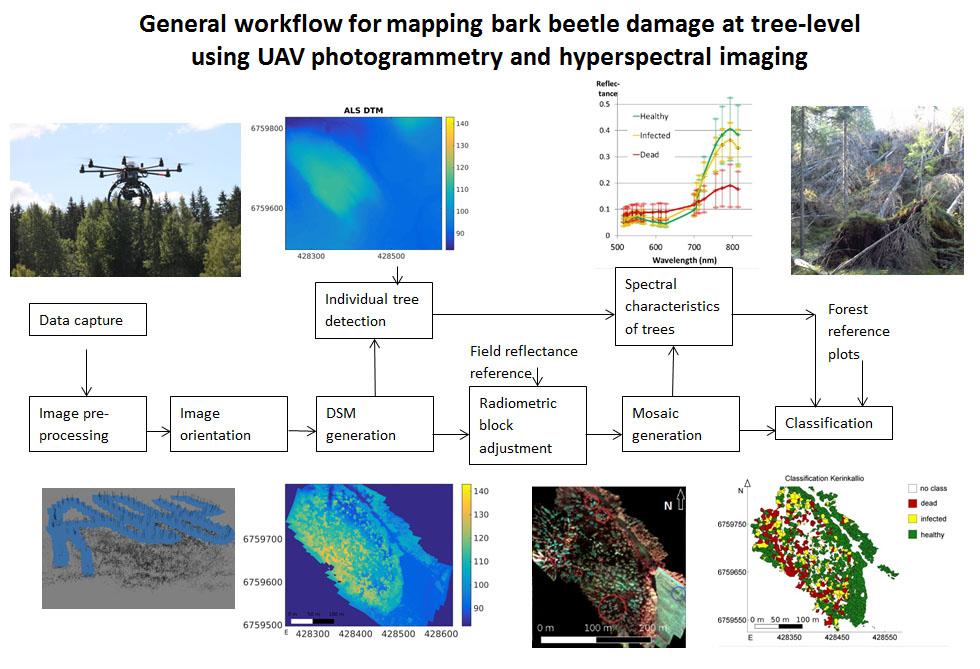 Tarkoilta UAV kuvilta voidaan tunnistaa yksittäiset puut ja luokitella ne spektritiedon perusteella erilaisiin kuntoluokkiin, kuten terveet, sairastuneet ja kuolleet. Tulokset voidaan esittää kartoilla.